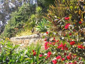 Harmony in Landscape Design Avalon Palm Beach Bayview
