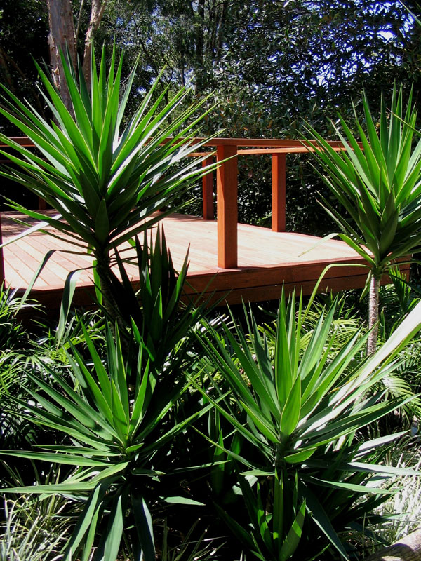 harmony in landscape design avalon palm beach bayview