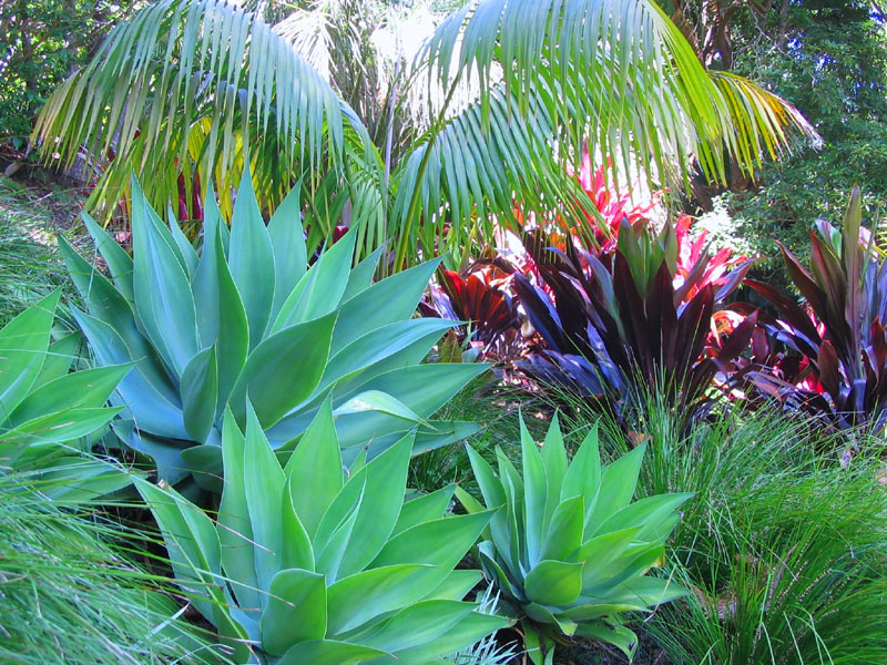 Tropical Garden Design Plants