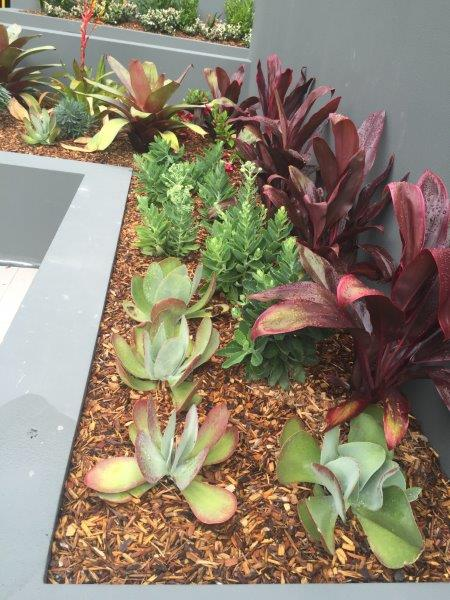 Planter Box Planting Colour