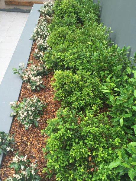 Planter box display of white and green