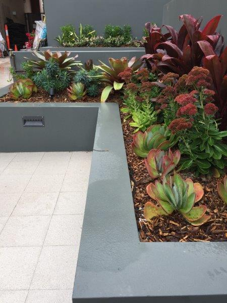 Strata Landscaping popular plant choice
