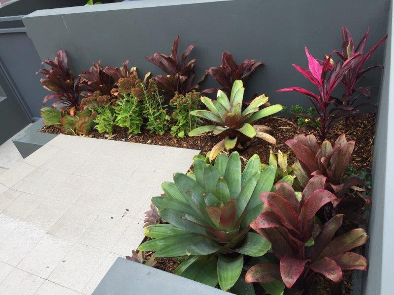 Strata Landscaping - planter boxes with purple