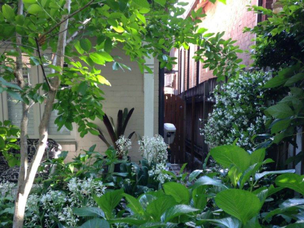 small garden ideas - jasmine hides side of house