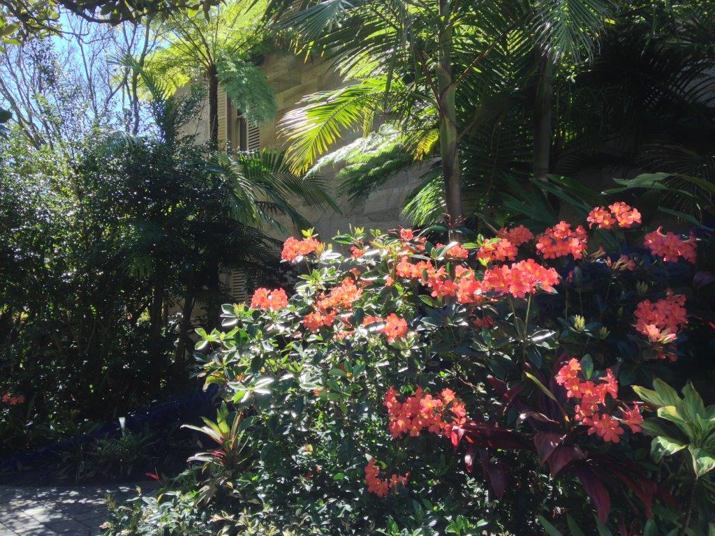landscape design - subtropical garden with white walls