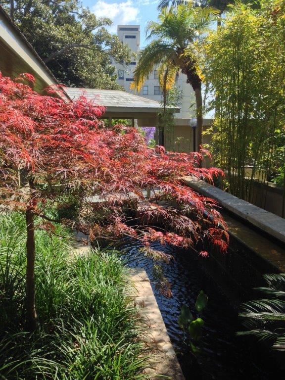 Kincoppal Landscaping Sydney - Autumn Colour