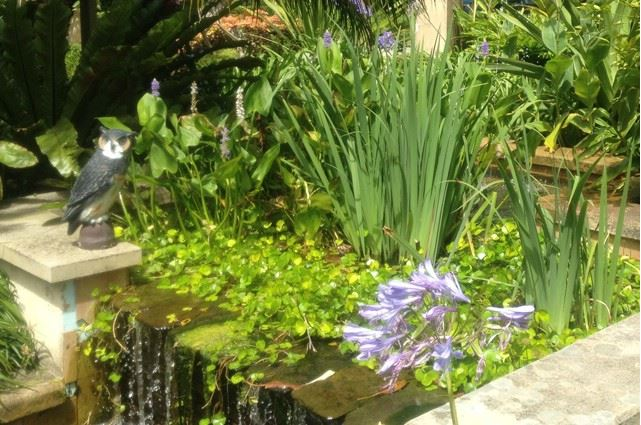 Sydney Landscapers Mosman Garden Pond Ideas