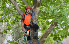 Northern Beaches Tree Removalists
