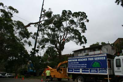 Tree loppers Northern Beaches Sydney