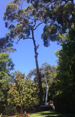 Tree Removalists Mona Vale
