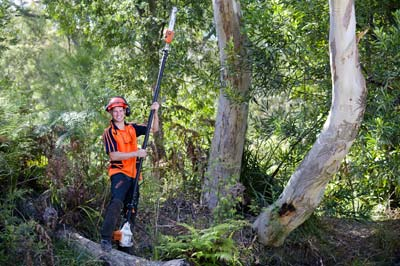 Tree removalists Northern Beaches Sydney