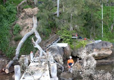 Tree felling Northern Beaches Sydney